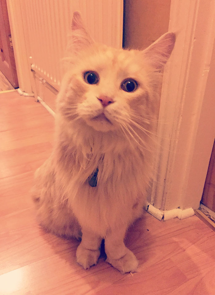35 уморительных моментов, когда ко мне домой пришел жить кот. Сам пришел!