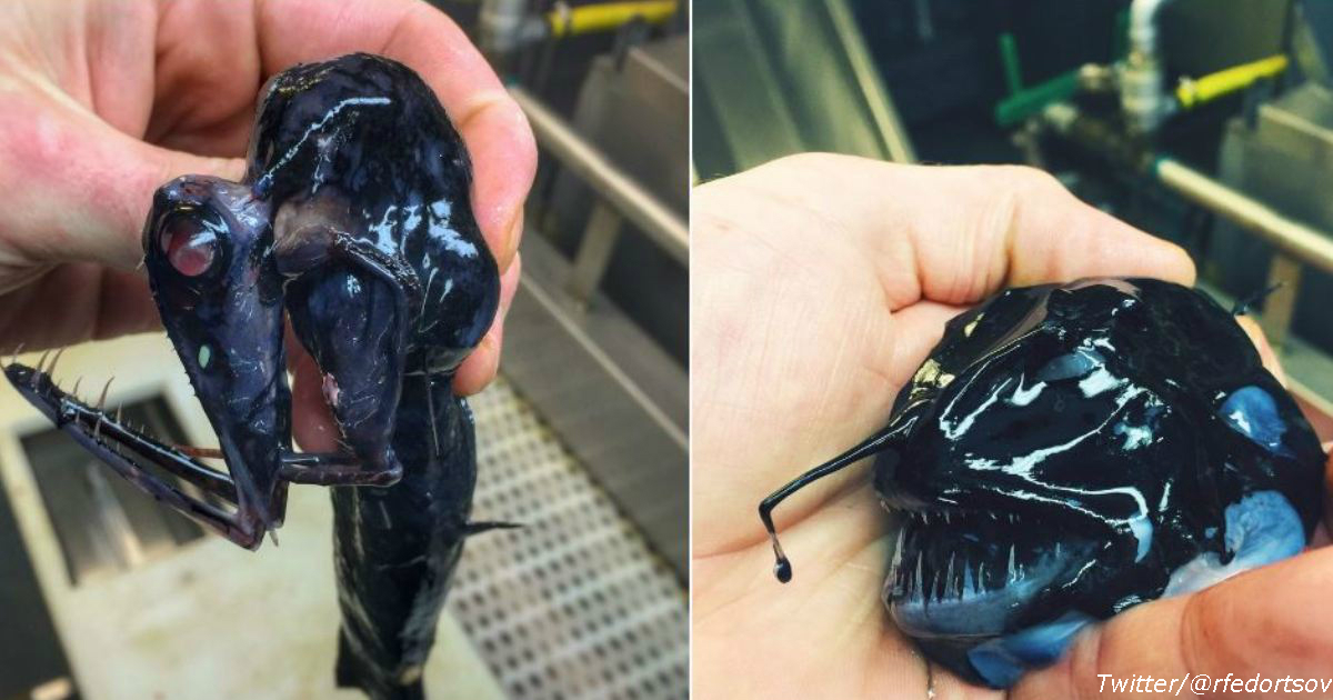 Русский рыбак забрасывает сети на морское дно - и вот что он там находит!