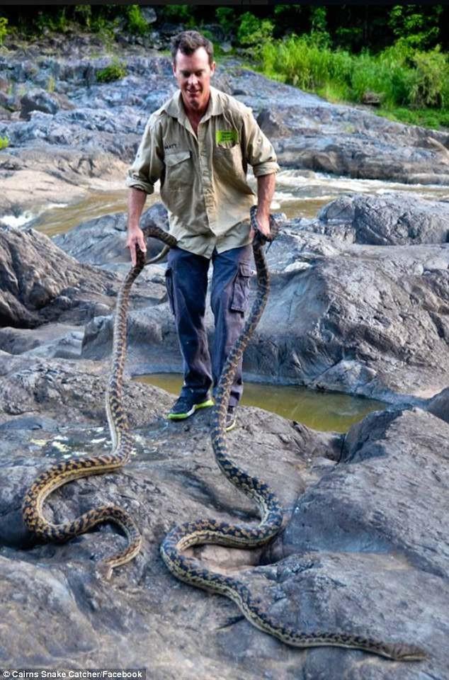 Змееловы вытаскивают десятки опасных змей издомов австралийцев после циклона