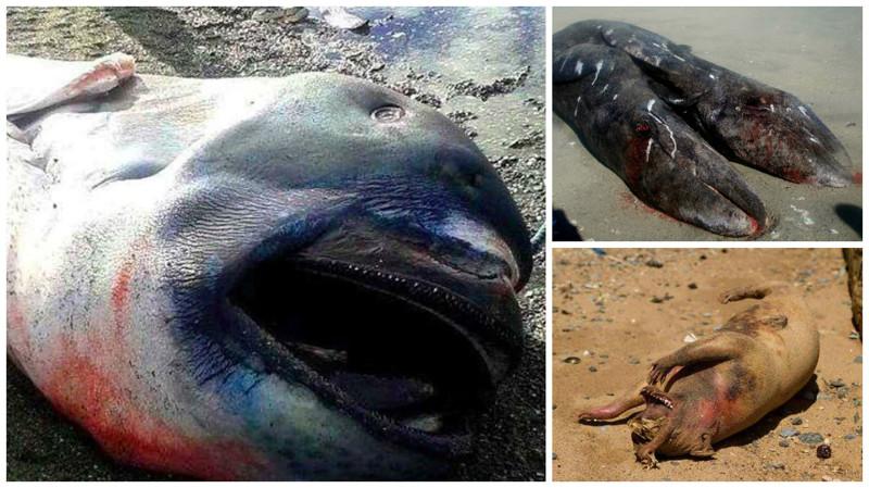 15таинственных существ, выброшенных изокеана наберег