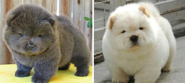 Это самые милые щенки на свете. Серьезно