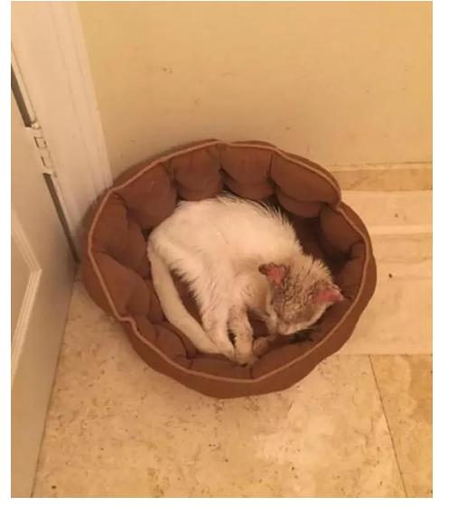 Ветеринары вернули коту зрение ибыли поражены красотой егоглаз