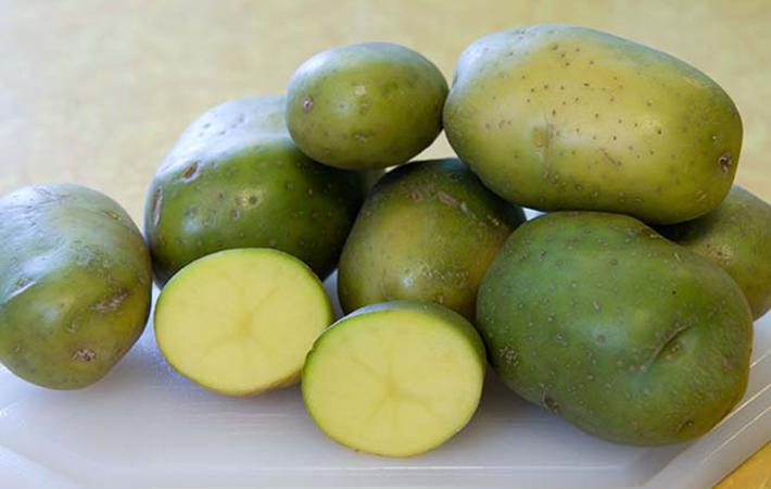 Если вы увидели зеленую картошку, немедленно выбросьте ее в мусор!