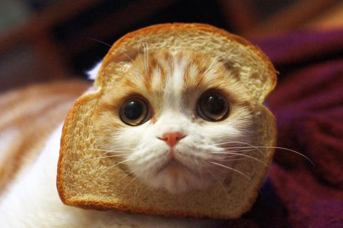 10 продуктов с нашего стола, которые следует давать и кошкам