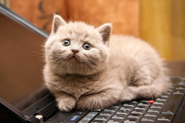 Дружеские чувства: ваша кошка действительно вас любит, - так говорят исследователи