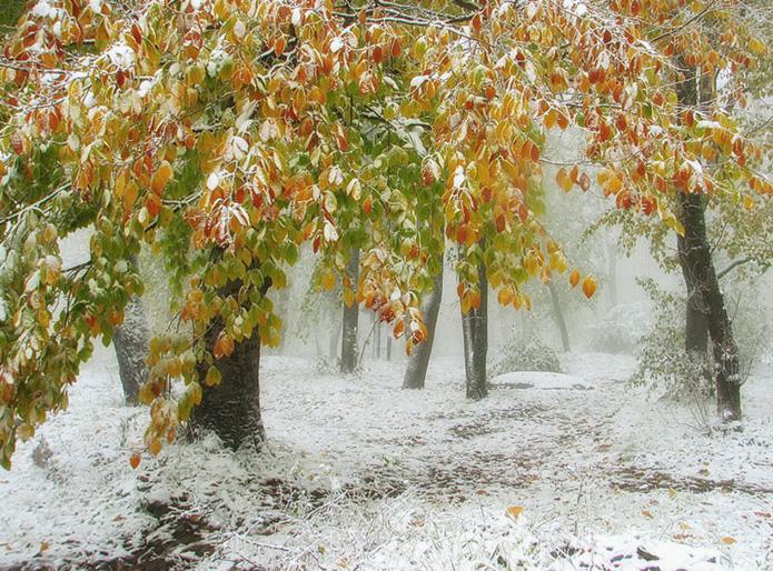 Между осенью и зимой