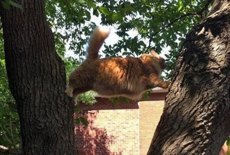 Коты попавшие внепростую жизненную ситуацию