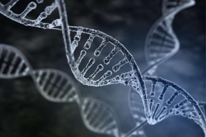 ДНК неандертальцев повлияла на нас намного больше, чем мы предполагали?
