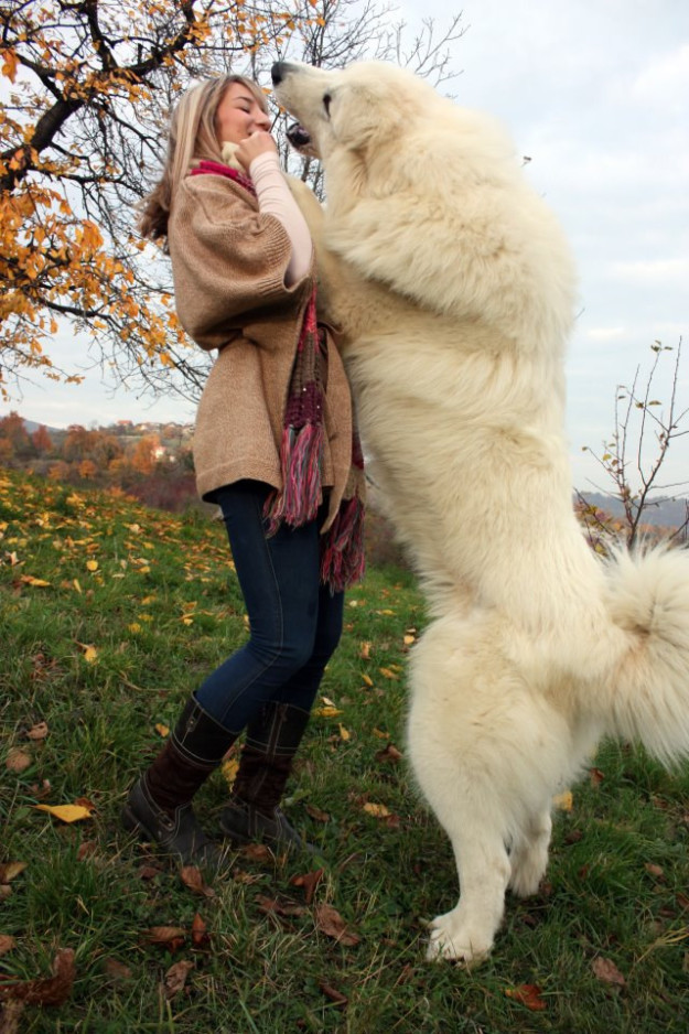 Этифотографии доказывают, чточембольше собака - темлучше