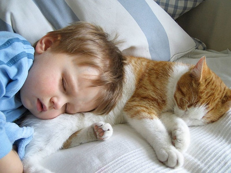 Длячего кошки ложатся спать схозяевами?