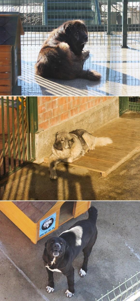Спасение собаки вгорах зимней Грузии