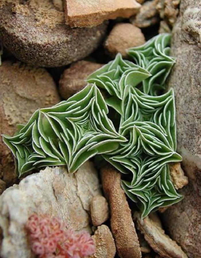 10 странных, но очень красивых комнатных растений, о существовании которых вы не подозревали
