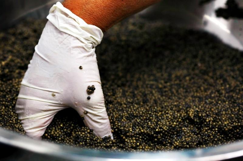 КаквИзраиле производят черную икру