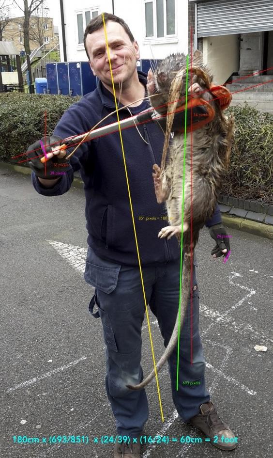 Гигантская «крыса-монстр», найденная надетской площадке вЛондоне