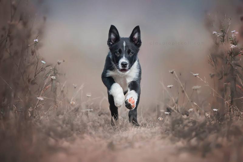 Летящие собаки: такпроявляется песья душа!