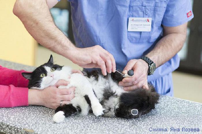 Второй шанс: врачи установили этому котику протезы, чтобы он мог ходить
