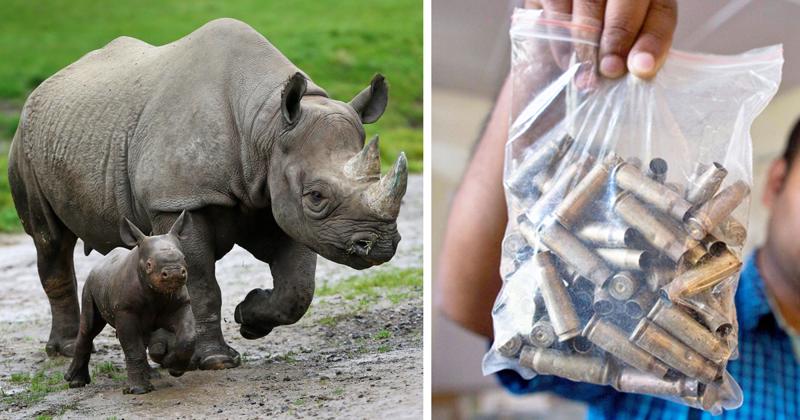 Внациональном парке отстреливают людей, чтобы сберечь носорогов