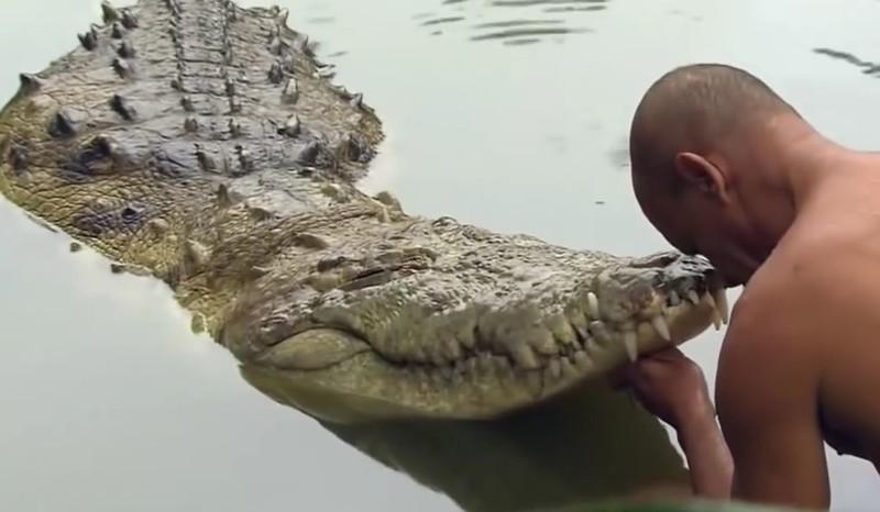 ВЮАРтрибрата погибли припопытке изнасиловать крокодила