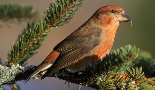 Птицы Подмосковья: список, особенности и интересные факты