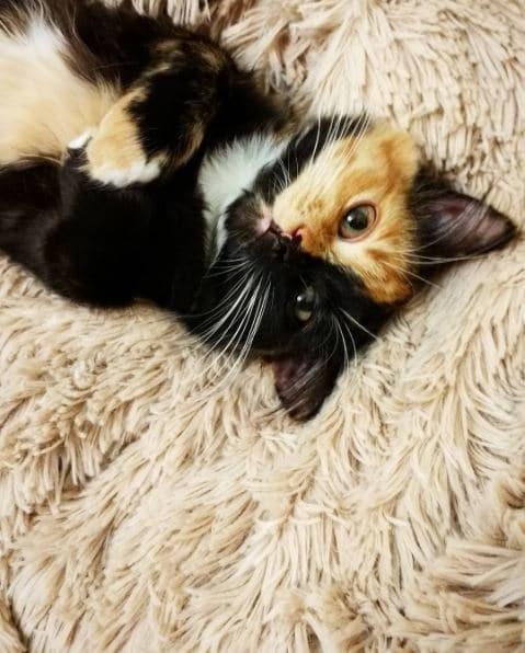 Яна- кошка сдвумя лицами!