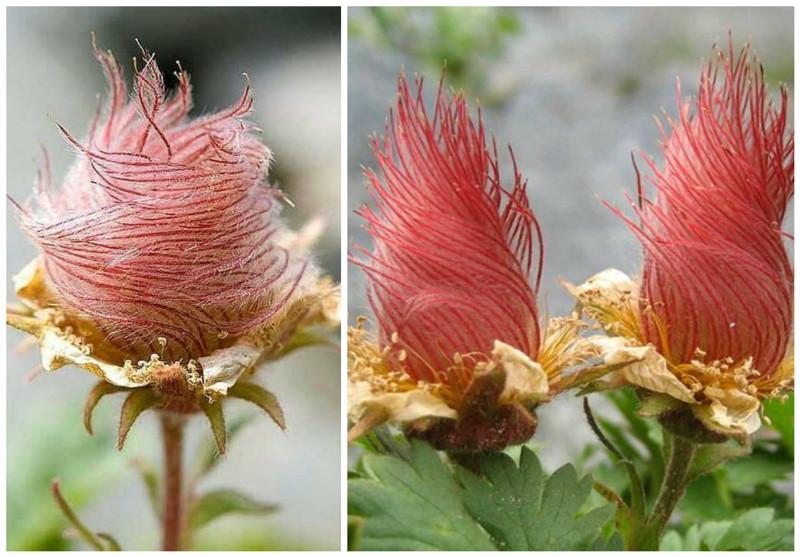 Выреально поразитесь иудивитесь, глядя наэтисумасшедшие  цветы ирастения мира
