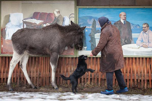 Гришка почти каксобака, нутолько очень большая идобрая собака