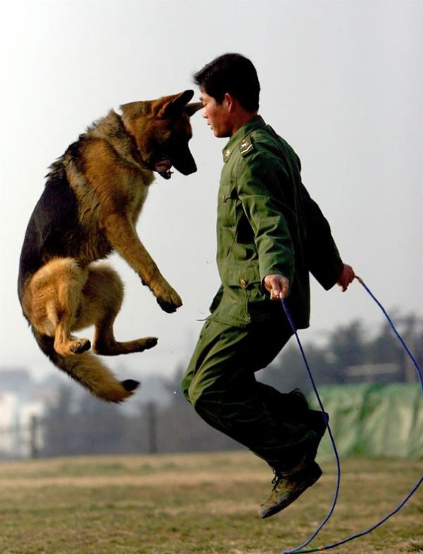 Служебные собаки