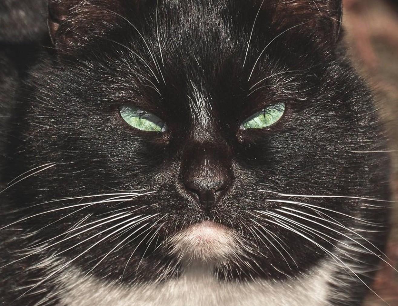 Глубокие портреты бездомных кошек Вильнюса