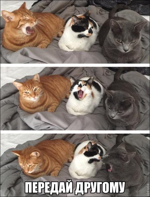 Прикольные картинки снадписями, смешные фото ипрочий юмор