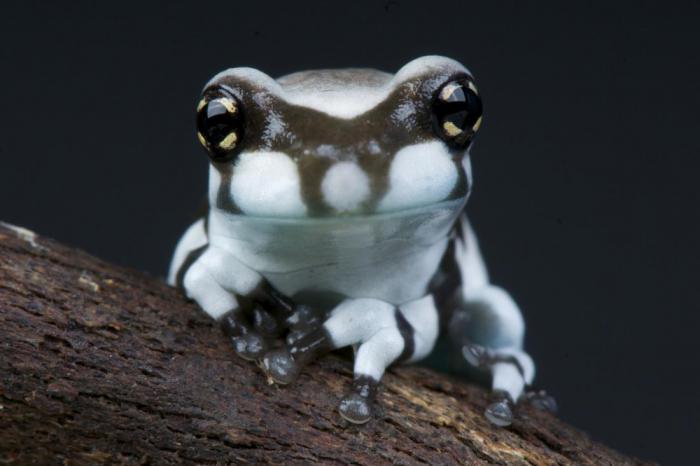Топ-10 самых необычных лягушек в мире