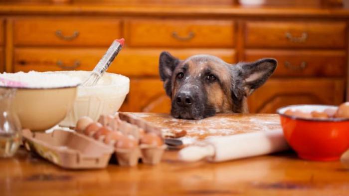 Что нужно знать, прежде чем самостоятельно делать лакомство для домашнего питомца?