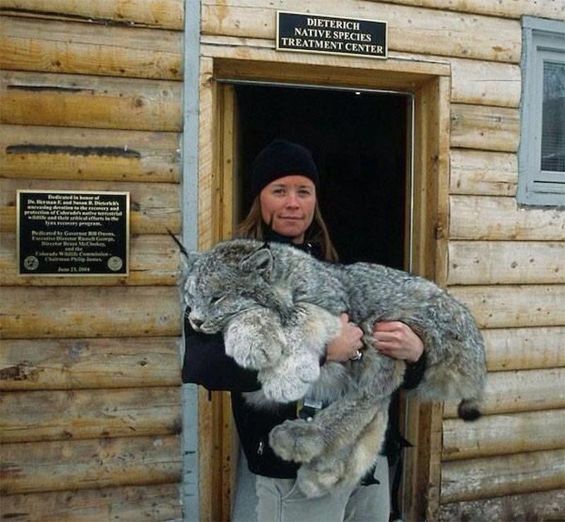 """""""Котик"""" с огромными лапками-снегоходами… Вы должны его увидеть!"""
