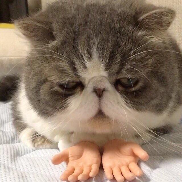 Отчаявшийся котскукольными ладошками
