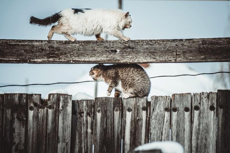 Очень колоритные уличные коты. Часть 3: спецвыпуск вчесть Днякошек вРоссии