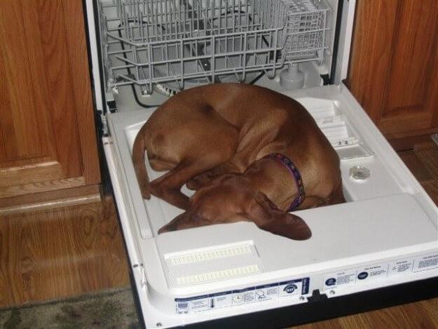 Забавные собаки, которые могут уснуть какигдеугодно