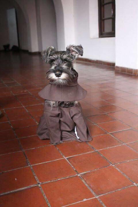 Первая собака-монах, которая живёт вмонастыре инаслаждается своей новой просветлённой жизнью