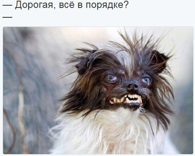 Фото - Видео Солянка Приколов!