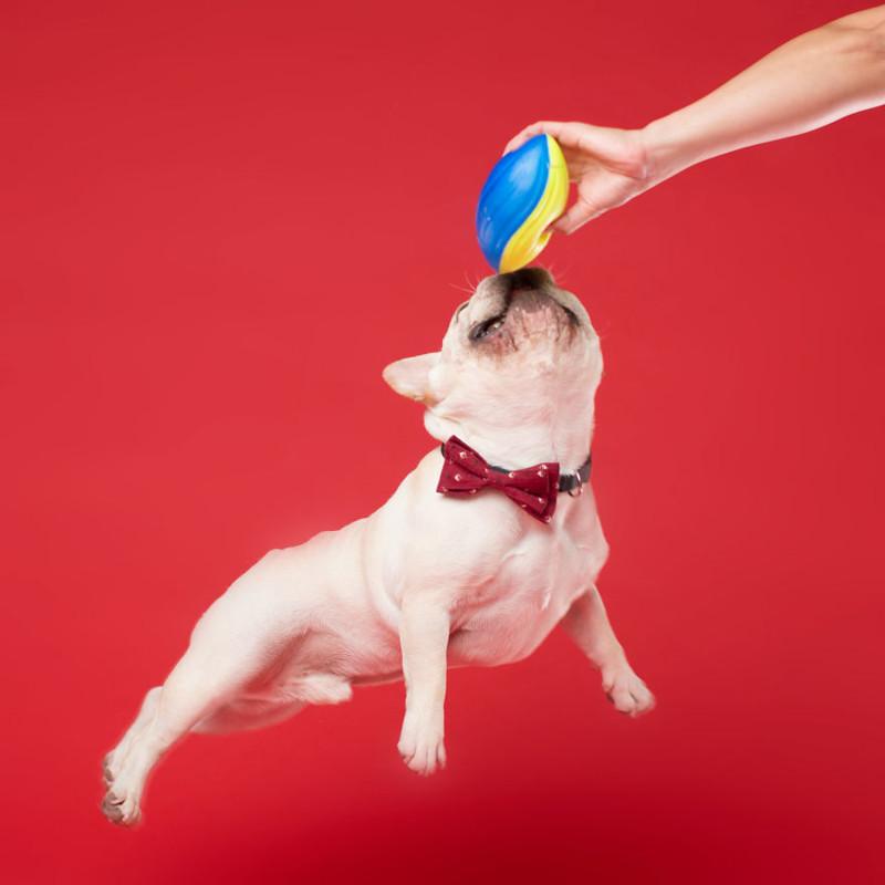 Фотограф делает очумелые снимки самых эмоциональных собак