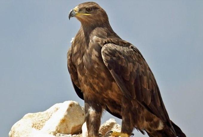 Вот, что делает орел, когда доживает до старости. Нам есть чему поучиться…