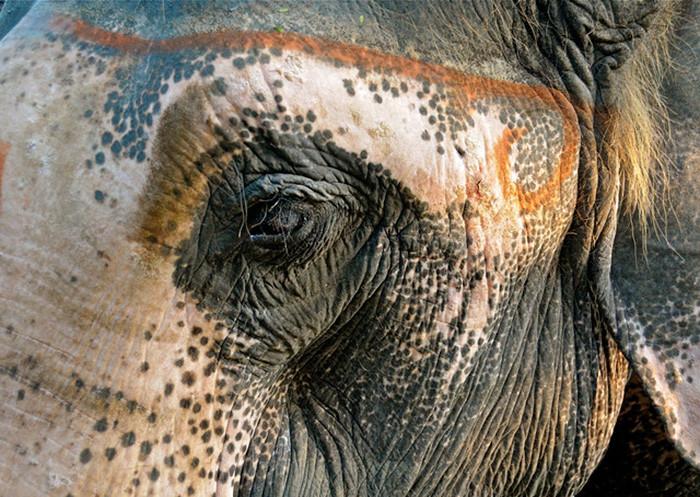 Нехватило краски: таквыглядят животные, страдающие нарушением пигментации