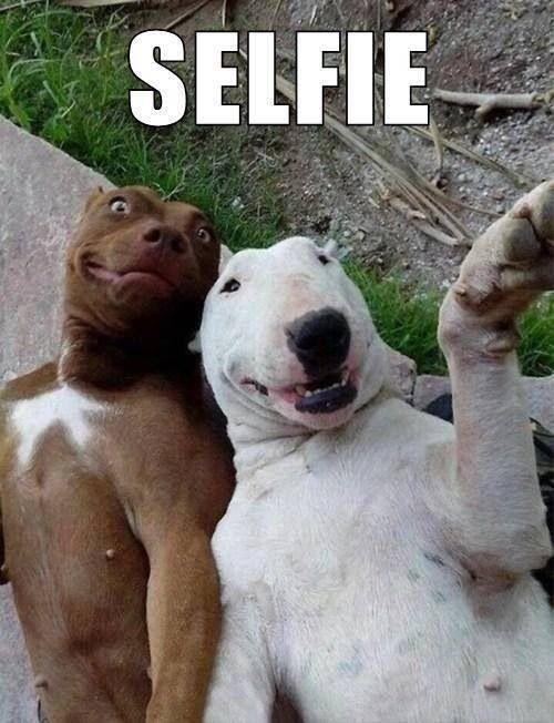 Замечательные животные иихчудесные исмешные поступки