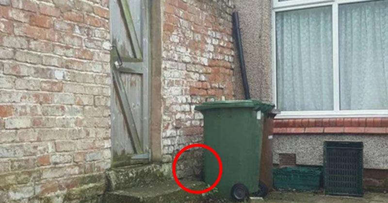 Только человек с уникальным зрением может найти на этом фото кота.