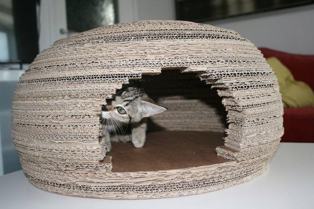 Девушка построила длякошки потрясающий домик-иглу изкартона ивоткаконаэтосделала