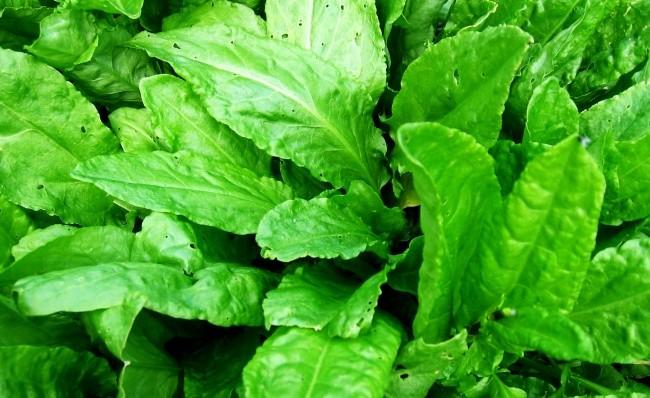 Овощи, которые можно слёгкостью выращивать дома