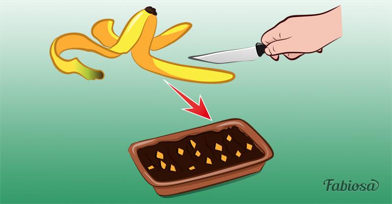 Что будет, если посадить в землю сырое яйцо и шкурки банана? Эти и другие хитрости для удобрения вашей почвы