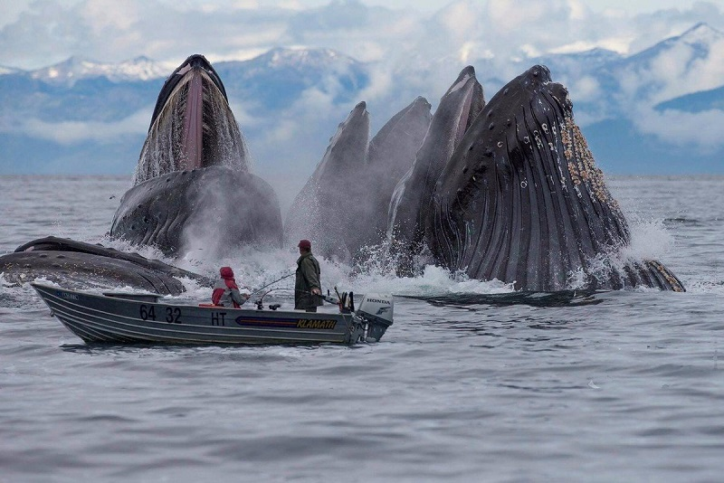 Когда фотографу повезло: 15 невероятных снимков, которые способны удивить любого.