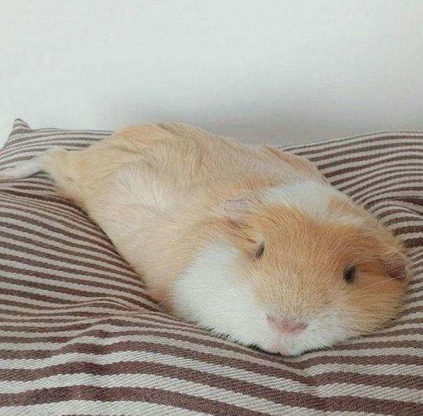 Поучитесь расслабляться уэтих животных!