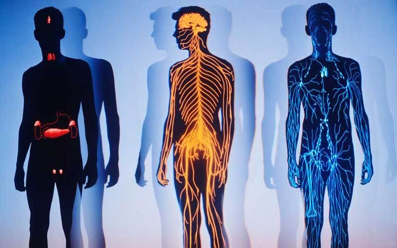 Неспособность прислушиваться к сигналам своего тела — причина многих болезней