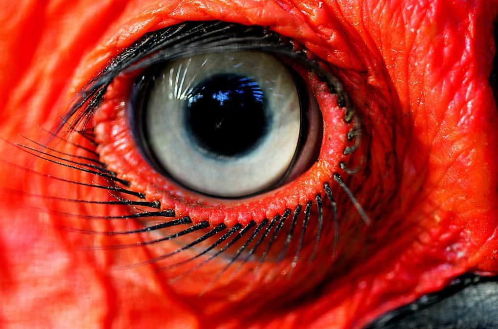 16 фотографий животных, ресницам которых позавидует любая женщина