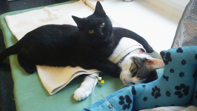 В польском приюте для животных «работает» кот медбрат